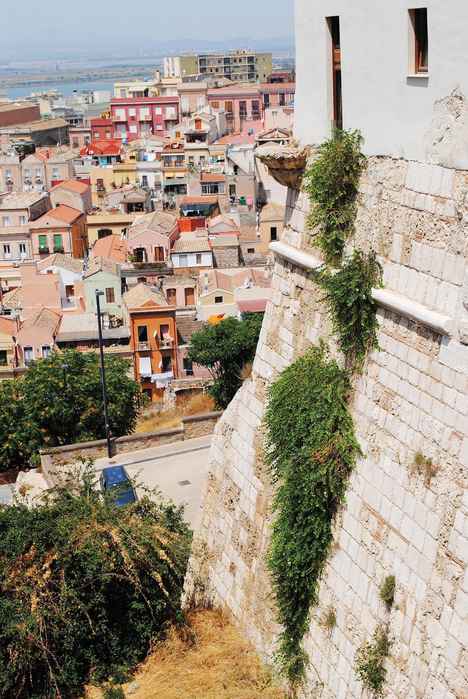 Caper plants on the walls of the Bastille. Cagliari Sardinia