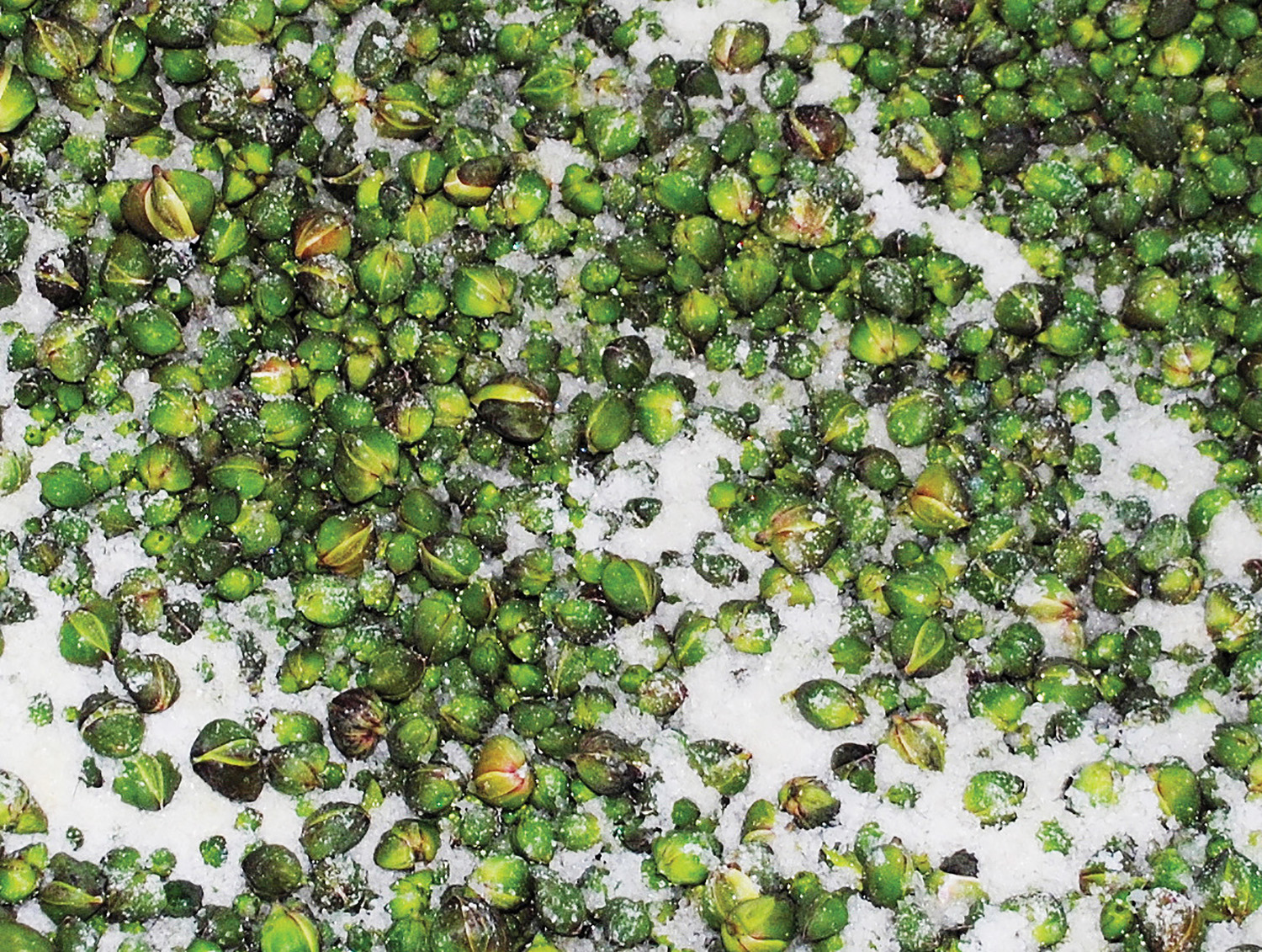 Preserving the capers in salt